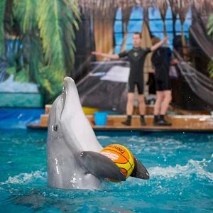Дельфинарии, океанариумы Рузы