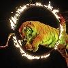 Цирки в Рузе