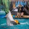 Дельфинарии, океанариумы в Рузе
