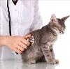 Ветеринарные клиники в Рузе